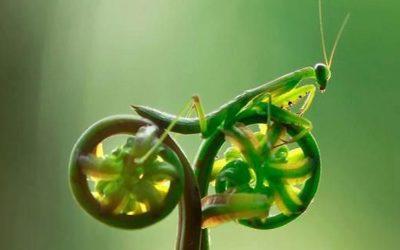 6/3/21 Ride – Harter Road Loop